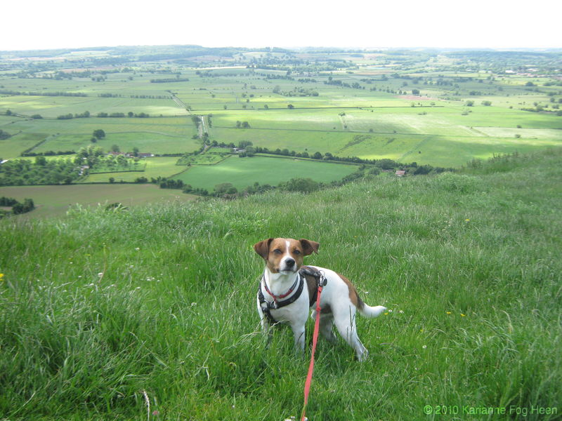 Odin on Glastonbury tor